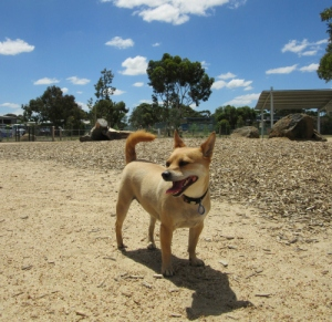 Tiffany at Craigieburn Dog Park