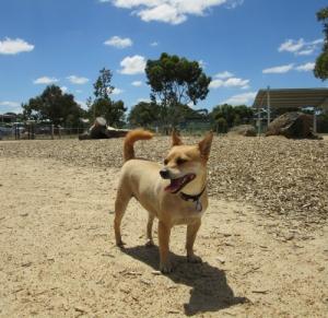Tiffany at Craigieburn Dog Park