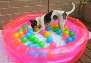 Co in the ball pit