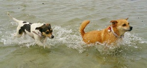 Co & Tiffany keeping cool during summer at Altona Dog Beach