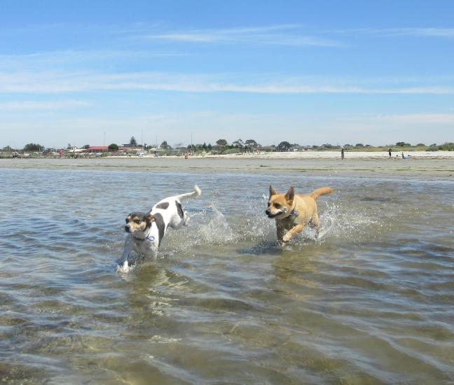 Altona Dog Beach