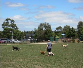 Aranga Reserve Dog Activity Centre