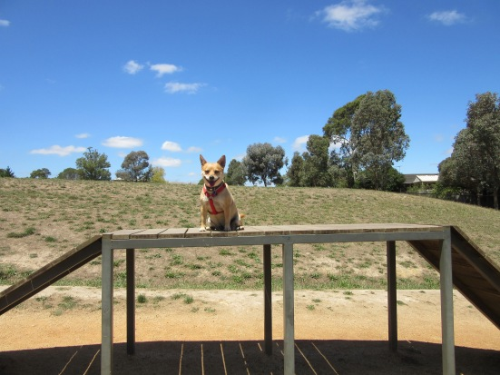 Tiffany guarantees your dog will enjoy it here!