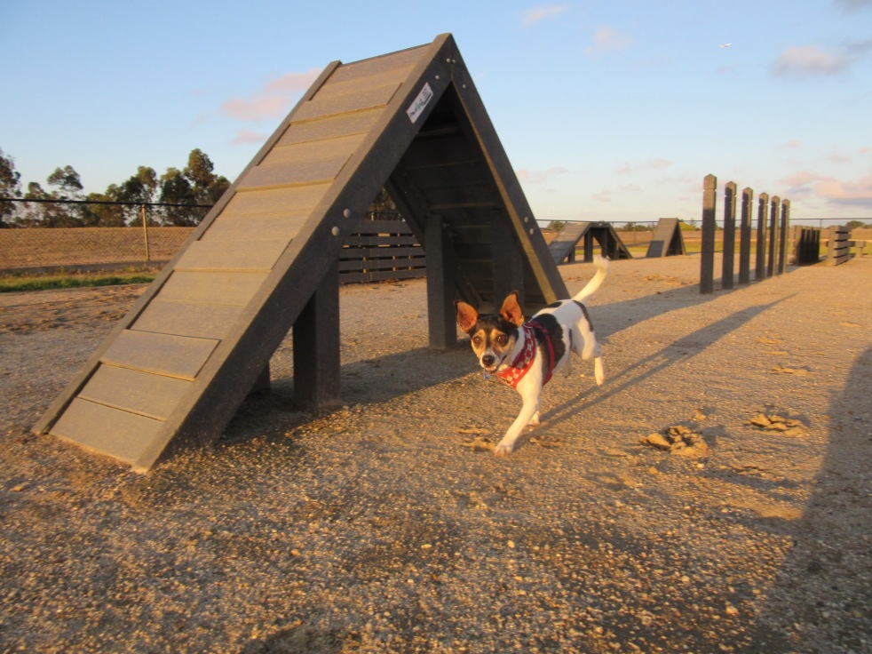 Co at Green Gully Reserve Dog Park