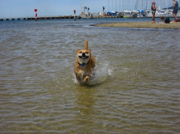 brighton dog beach
