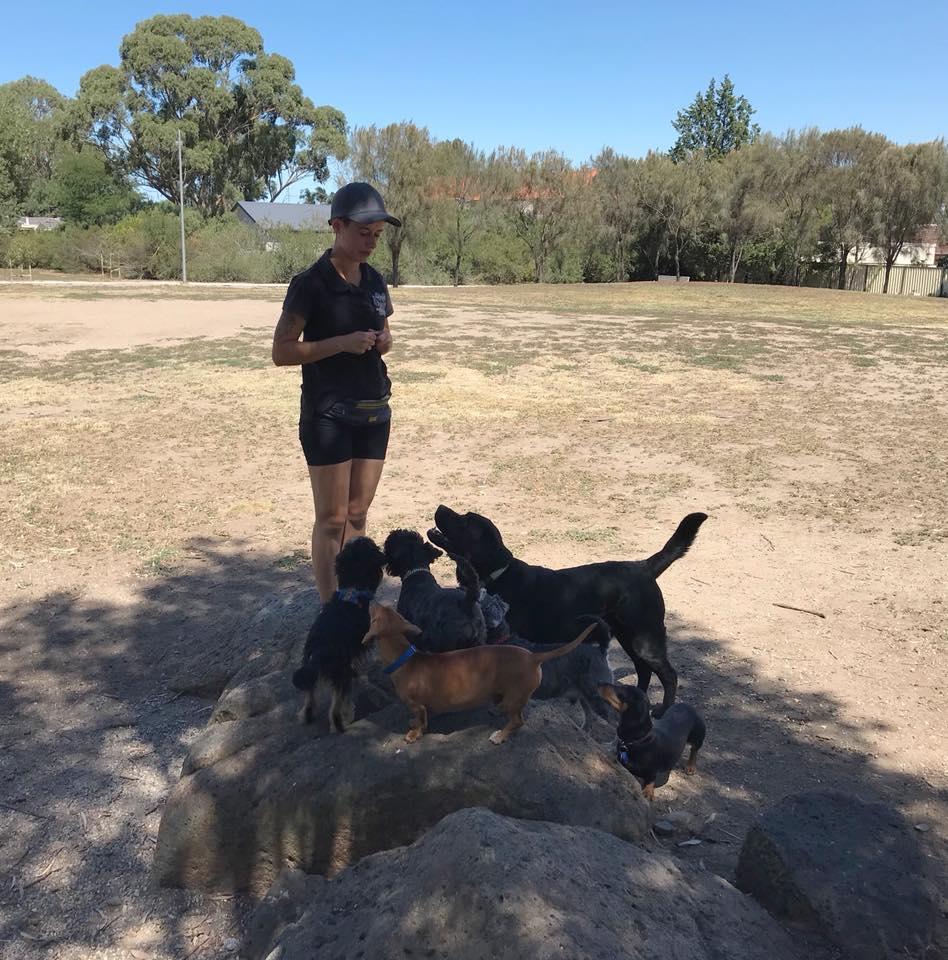 Dog Friendly Places Melbourne